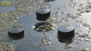 naturagart tv algen im teich. Black Bedroom Furniture Sets. Home Design Ideas