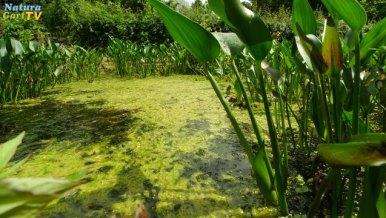 20130621-entstehung-vermeidung-algen