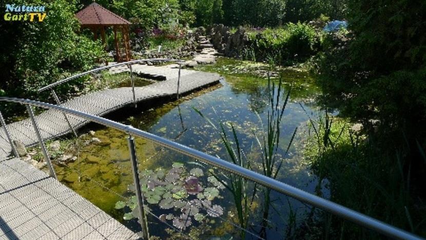 schwimmteich mit steg | produkte, schwimmteich, Haus und garten