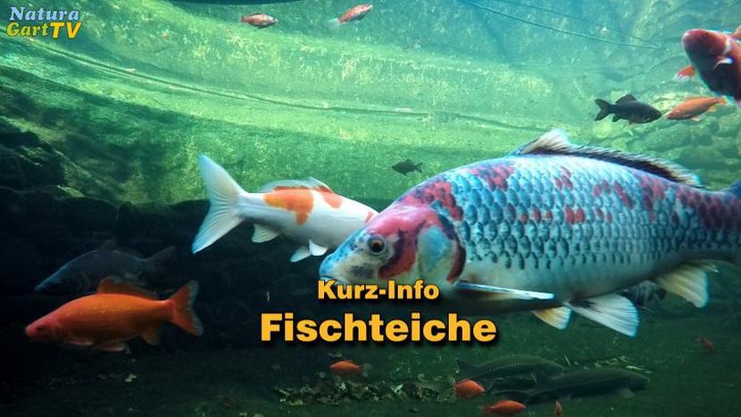 Fischen Dating-Standorte