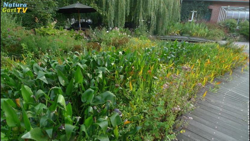 Tv | Videos Von Naturagart über Teichplanung, Teichbau ... Garten Dezember Wo Was Verbessern