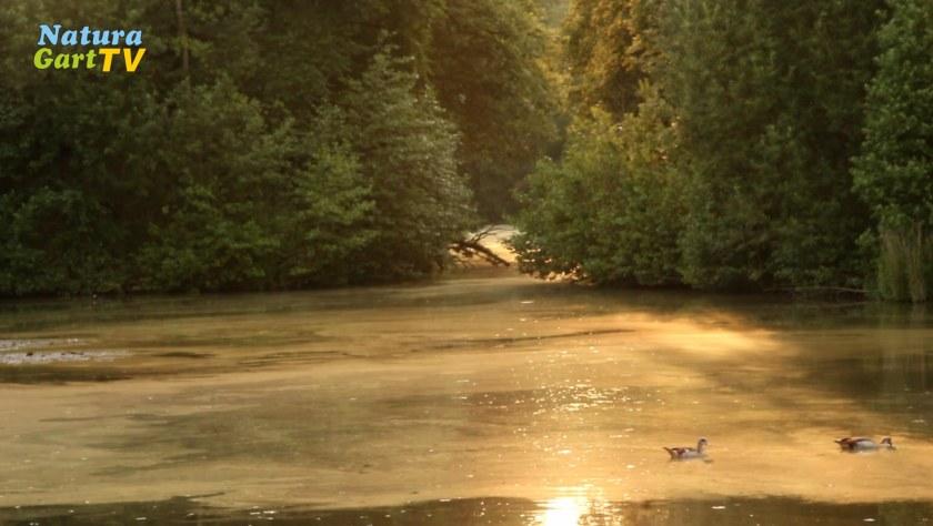 Teichprobleme Frühzeitig Erkennen Klares Wasser Wenig Algen Im Teich